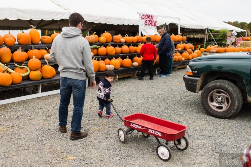 1510_Fall_toddler_pumpkin_001