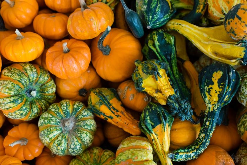 1510_Fall_toddler_pumpkin_002