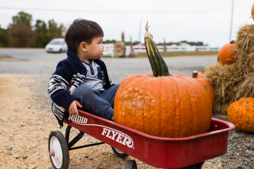 1510_Fall_toddler_pumpkin_004