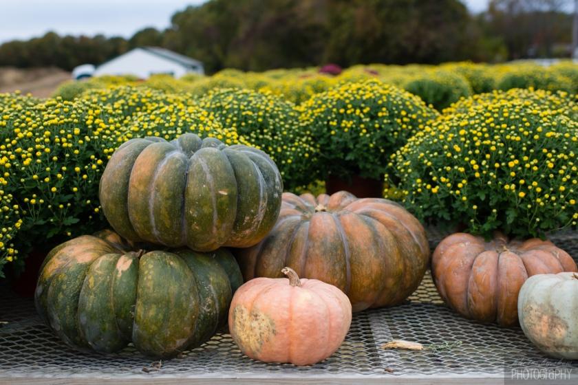 1510_Fall_toddler_pumpkin_008