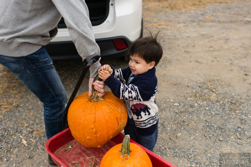 1510_Fall_toddler_pumpkin_009